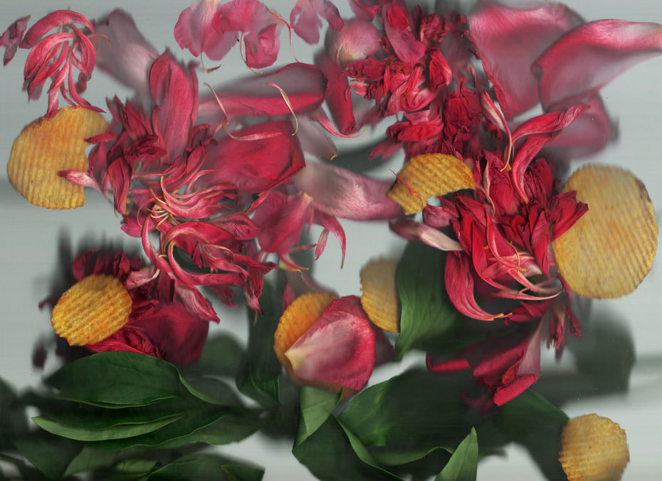 Анастасия Глушкова. scan+flowers #3