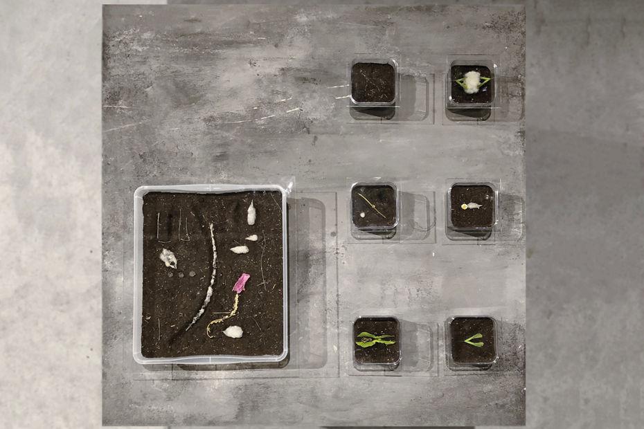 «Секретики», студентки Екатерина Мордвинкина иМаргарита Варакина, профиль «Дизайн исовременное искусство»