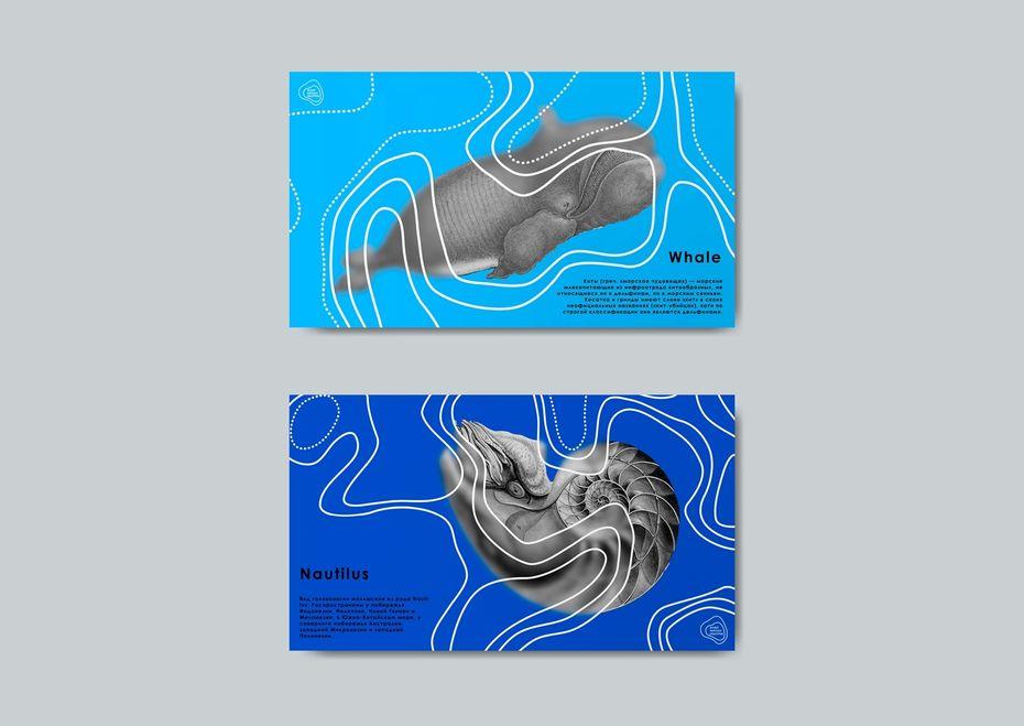 Музей морских монстров. Екатерина Котрачева, «Коммуникационный дизайн», Iкурс. куратор Елизавета Копай-Гора
