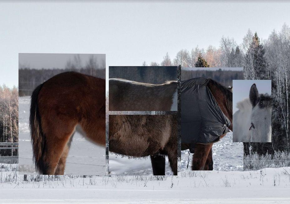 Synthetic horse. Екатерина Аксенова